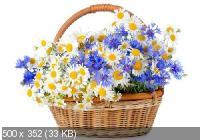 Красивые цветы в сборнике обоев для рабочего стола. Часть 6