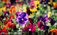 Красивые цветы в сборнике обоев для рабочего стола. Часть 7